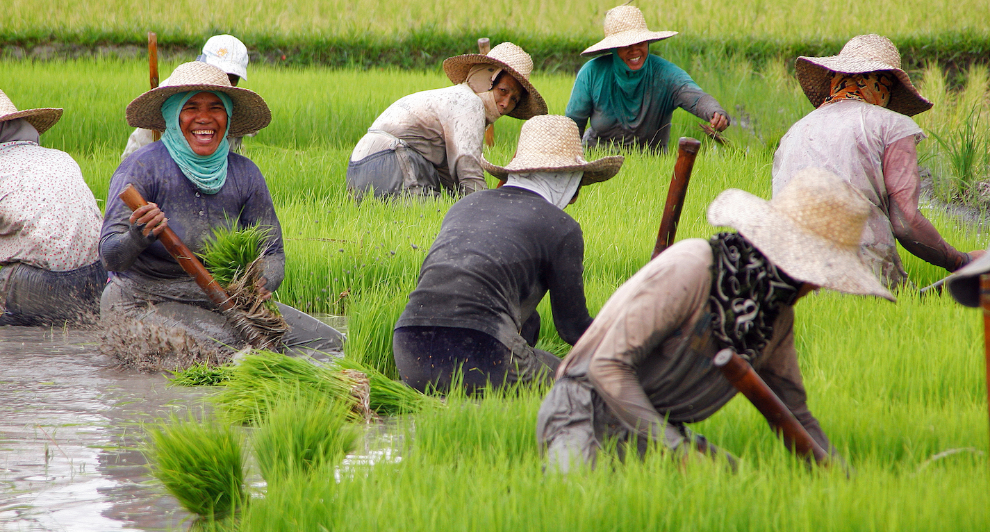 The effects of land reforms on farm size and agricultural